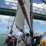 Sailing under Auckland bridge from  the museum