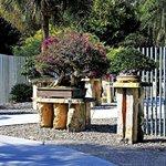 Part of the Bonsai Garden