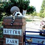 Sweetest farm kitty
