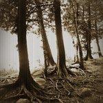 Roots around Cyprus lake