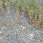 Underground Lava Burning Trees