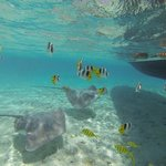 Swimming with sharks, rays and fish.