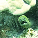 Surprise! Moray Eel