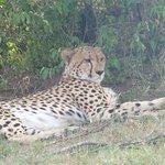 Cheetah relaxing!!