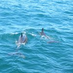 Dolphins sighted but not playful