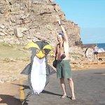 Aussie Penguins visiting Cape Point!