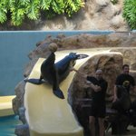 sealions was hilarious
