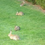 outside of the room, wild rabits