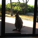A local friend came for breakfast on our deck amongst the natural surrounds.
