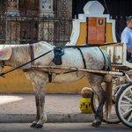 Donkey in Valadolid