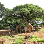 African enclosure