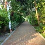 Main walk way through the island