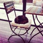 Esterno con gatto....