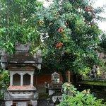 Gandra House Ubud rambutan tree in the courtyard garden