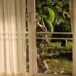 Affenprobleme kommen in das Luxusappartement un d schieben sich selbst die Türen auf. Securite s