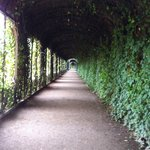 Schonnbrunn Castle - view of walkway - along gardens to east of Palace