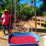 Hectar the coffee farmer
