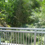 Jungle view / balcony