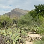View of the Santa Catalinas