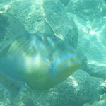 Snorkeling at Coral Gardens beach