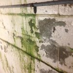 Algae, mold, and urine in the Tropicana Hotel stairwell