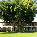 100 year old ficus tree shading the hotel rooms