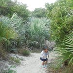 Loggerhead's Little Nature Trail