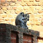 Monkeys at the guesthouse