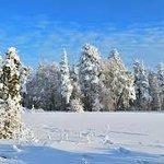 Bosque Mikkeli