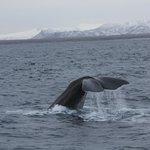 Sperm Whale waving goodbye