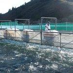 Salmon Farm feeding time