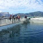 Guests walking around the NZ King Salmon Farm