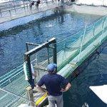 Visit to a NZ King Salmon farm