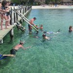 snorkeling and swimming by the pier