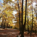 Rib Mountain State Park (October, 2013)