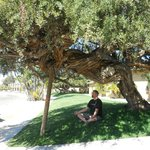 The zen tree