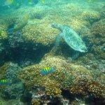 Isla Iguana extremo sur