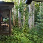 View from the bar into the Paperbark forest
