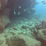 School of fish sheltering honu at Sheraton Caverns