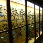 Bird display cases
