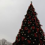 A look of the 35' christmas tree. PNC Festival of Lights