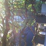 Vista do quarto...rua tranquila e arborizada.