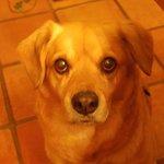 host's dog