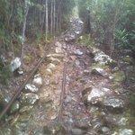 Mount Wellington (5)