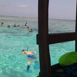 Day trip snorkelling at mnemba island