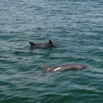 Family of dolphins!
