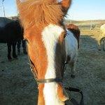 my horse, Feykir