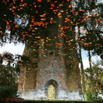 Reflection of Bok Tower in the mote