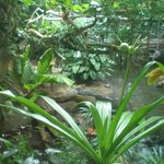 Zona alligatori