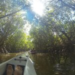 Through the mangroves